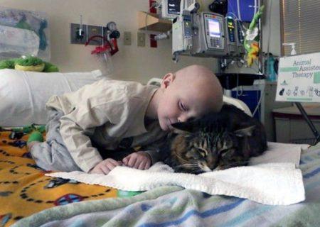 Scopri il potere curativo dei gatti