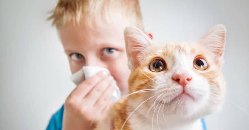 Allergia al gatto, sintomi e cure