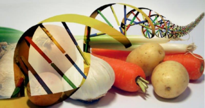 Campo energetico vibrazionale degli alimenti
