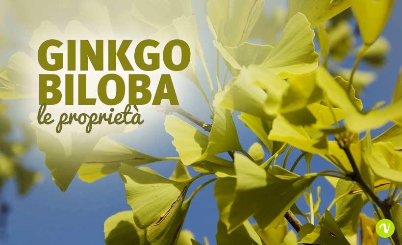 Ginkgo biloba capsule benefici e utilizzo